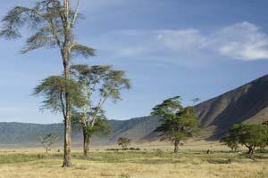 Der Kraterrand des Ngorongoro in Tansania