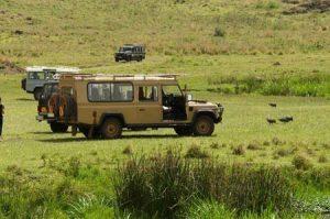 Tansania: Safari in den Nationalparks