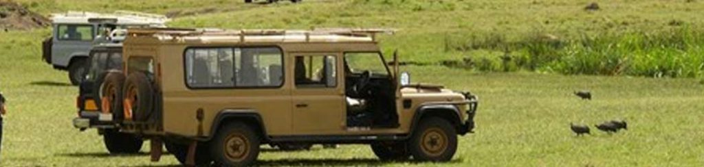 Tansania: Safari