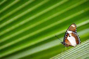 Sehenswürdigkeit auf Sansibar: Schmetterlingsmuseum