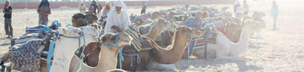 Tunesein: Oase Douz und Wüstenauzsflüge