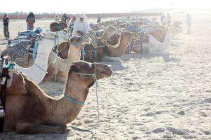 Wüstenausflug in die Oase Douz in Tunesien