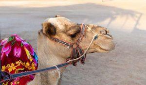 Tunesien: Wüstenausflug in die Sahara